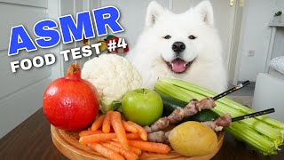 Asmr Dog Reviewing Different Types Of Food #4 I Mayasmr