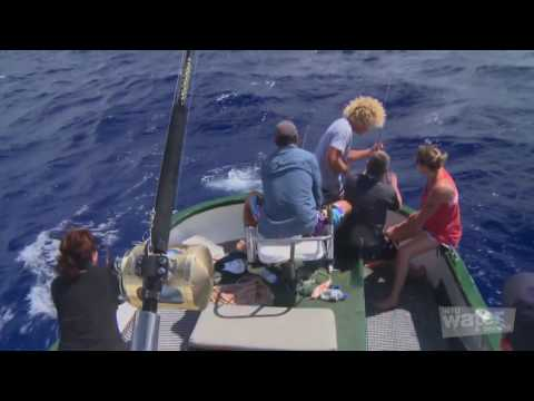 Part 4 of 6   Cook Islands, Game Fishing and Sailing in Rarotonga, Holiday travel video guide   Part