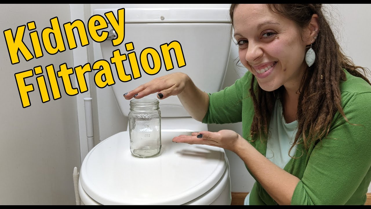 Kidney Filtration: A Basic Overview