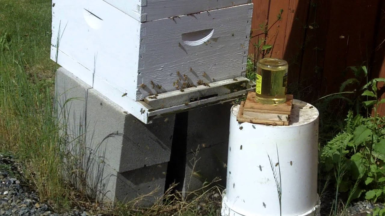 Charmant My Back Yard Honey Bee Hive, Second Season