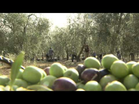 Andalusia's agri-industry, an important source of employment