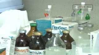 Бешенство вакцинация