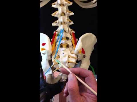 Lumbar Spine Muscles Part 1 Youtube