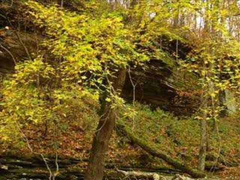 Fall Foliage in NW Arkansas