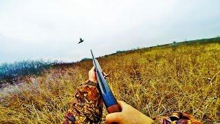Охота на фазана с сеттером