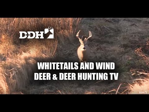 Whitetails And Wind | Deer & Deer Hunting TV