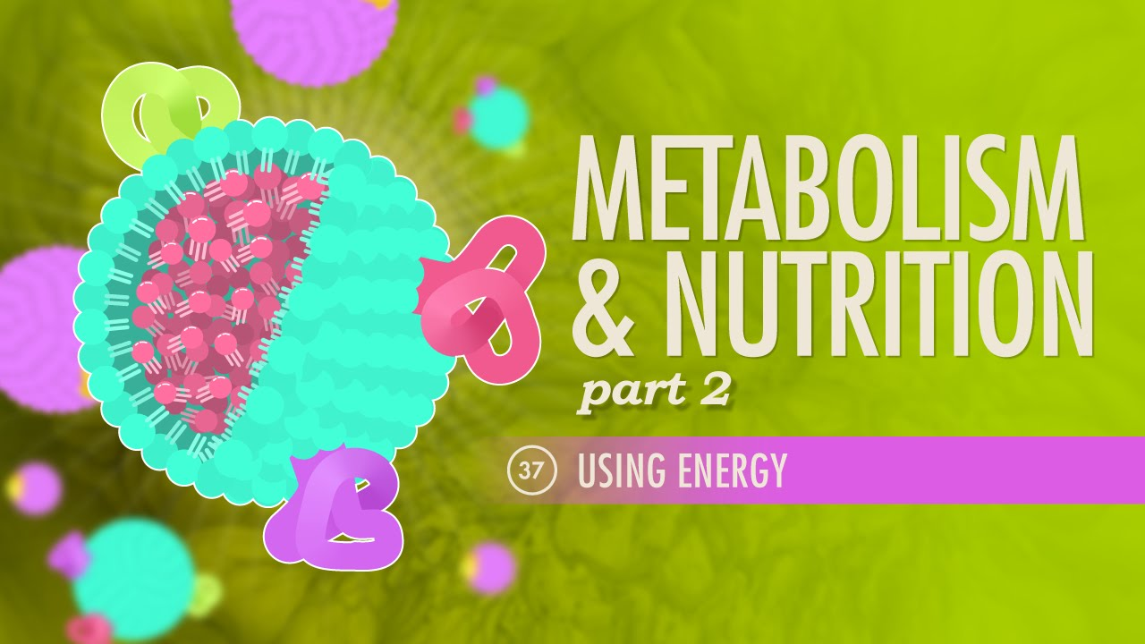 Metabolism & Nutrition, part 2: Crash Course A&P #37 - YouTube