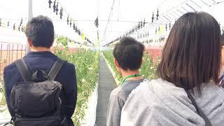 先端農業技術科 オープンキャンパス 先端農業 施設見学
