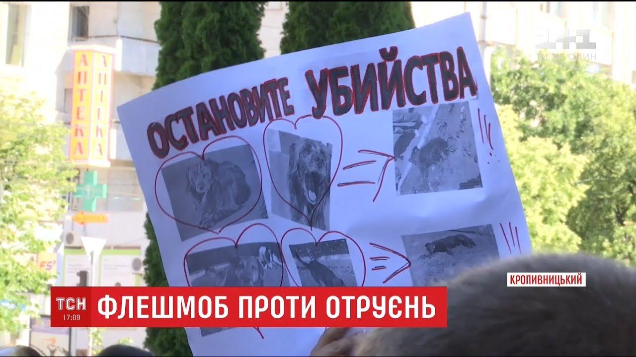Жителі Кропивницького вийшли на протест проти масового отруєння безпритульних собак