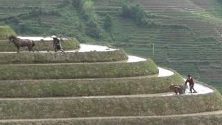 Longji Terraces, South West of China  #1...龙脊梯田,南中国西部#1