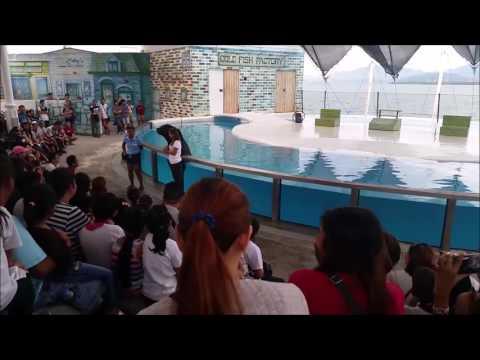 Ocean Adventure The Sea Lion Show