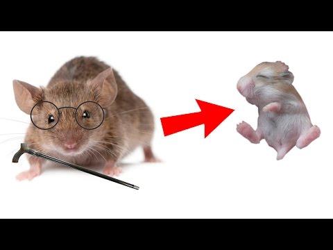 Harvard Scientists Reverse Aging In Mice