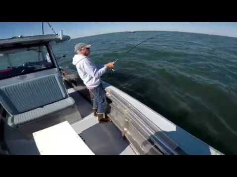 Full Boat Review - Metal Shark 32 Fearless Followed By Albie Fishing!