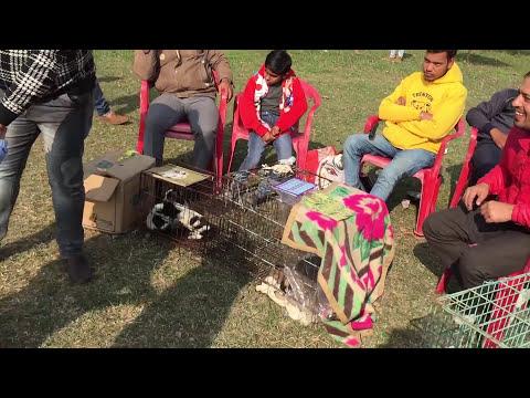 Dog Show Amritsar - Bhola Shola