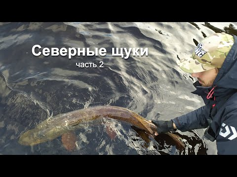 Cеверные щуки, бешеный клёв и приключения на Ямале - часть 2. Carzy Pikes Fishing Russia Yamal