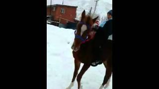 Обучение лошади смотреть до канца