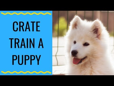 how-to-crate-train-a-puppy-|-how-i-crate-trained-my-samoyed-puppy