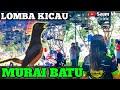 Kontes Burung Murai Batu Latber Sepesial Bandar Bc Ronggo Lawe  Mp3 - Mp4 Download