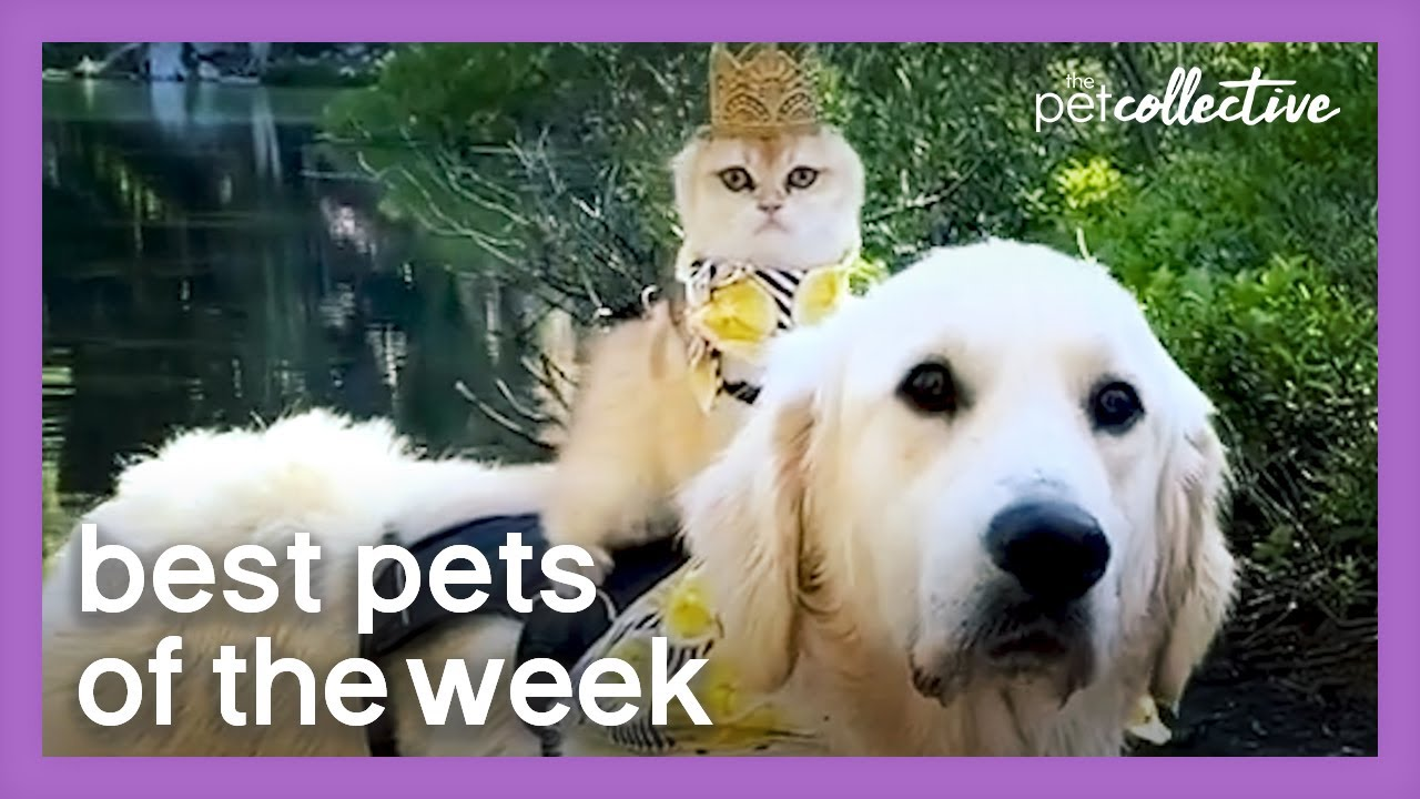 The King Has Returned | Best Pets of the Week