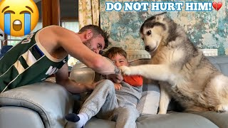 Husky Does Everything She Can To Protect My Baby!! [CUTEST REACTION EVER!!]