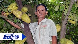 Lão nông thu tiền tỷ nhờ cây mãng cầu xiêm | VTC