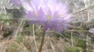 Мудрец Йога Васиштха - Обучение Рамы и полное понимание истинного абсолюта. 047