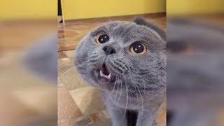 Правда ли, что коты видят призраков?