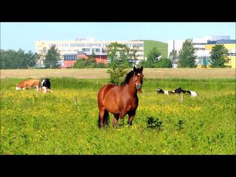 Hackney pony Camo is an observer