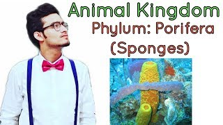 Animal kingdom: Phylum Porifera (Sponges)