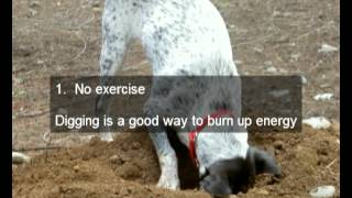 Stop A Dog From Digging Holes For Good, You Don't Have To Put Up With It Anymore