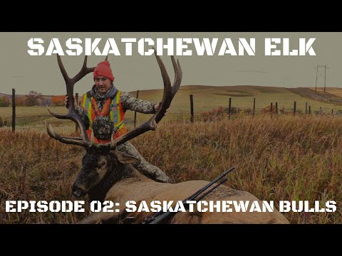 Giant Saskatchewan Elk Hunting: Saskatchewan Bulls