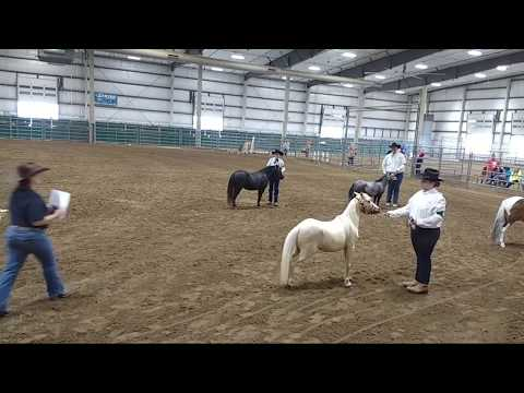 2018 Lancaster County Super Fair - 4-H Miniature Horse Show