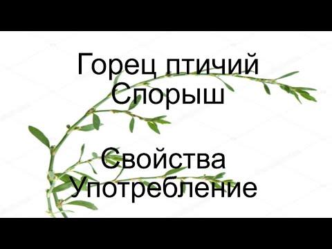 Горец птичий -Трава мурава Свойства. Отзывы Самопомощь Хорошее здоровье Красота Китайская медицина