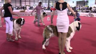 World Dog Show Milano 2015 Saint Bernard long hair Juniors, males
