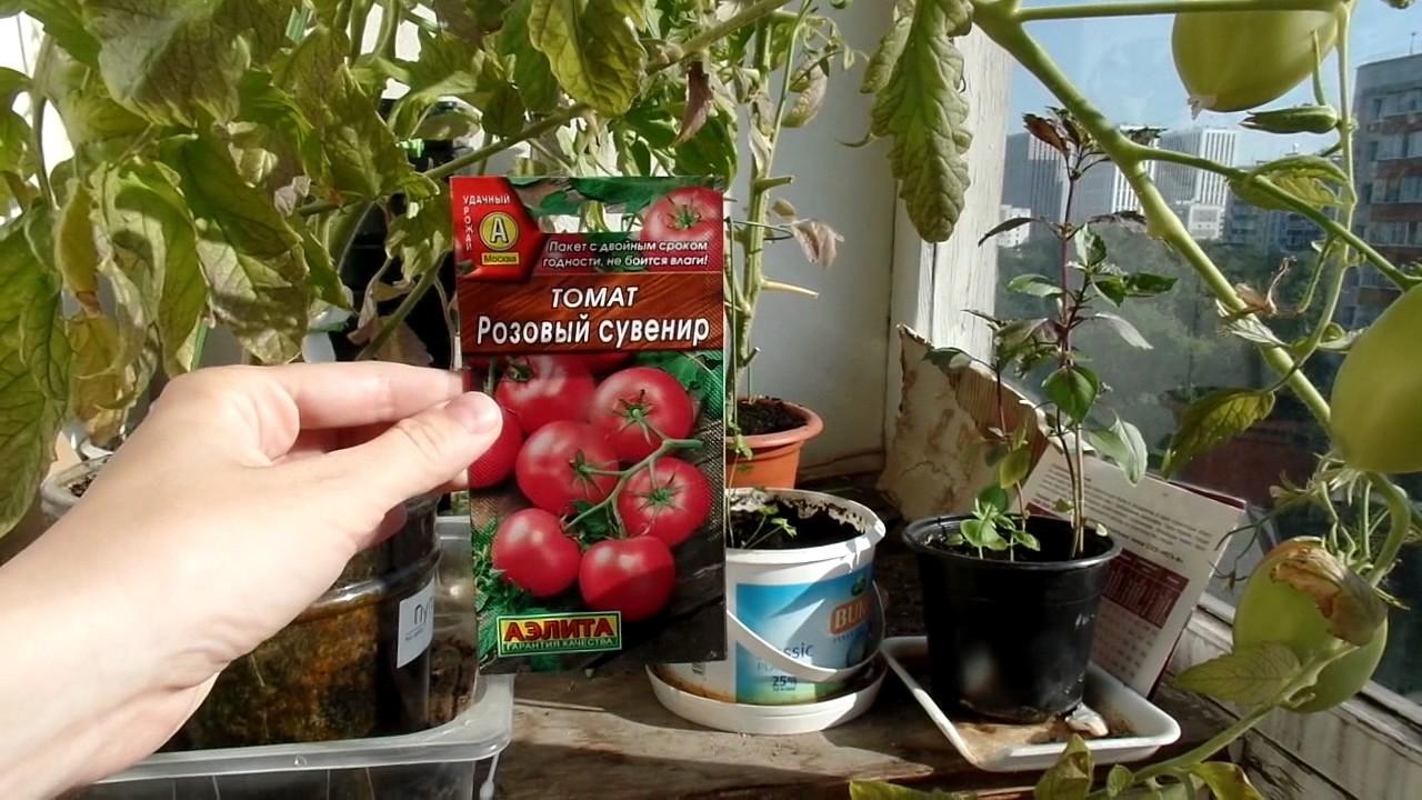 Какие сорта помидор лучше сажать на балконе.