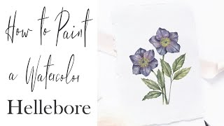 How to Paint a Realistic Watercolor Flower    Hellebore Botanical Painting screenshot 3