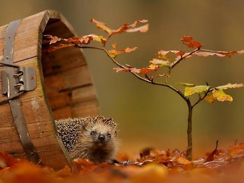 И снова осень...