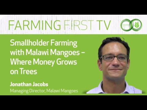 Smallholder Farming with Malawi Mangoes - Where Money Grows on Trees