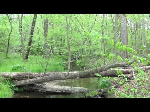 Adkins Arboretum, Maryland