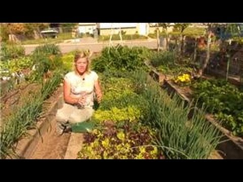 Growing vegetables how to add lime to your vegetable - What is lime used for in gardening ...