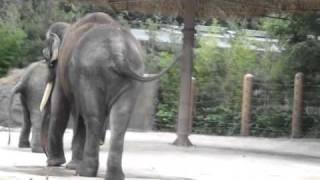 everland korea 2010 elephant peeing