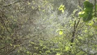 Video Sussex Garden Valley Bluebells & Sloe Trees download MP3, 3GP, MP4, WEBM, AVI, FLV Desember 2017
