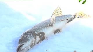 В субботу состоится 10-й чемпионат по зимней рыбалке