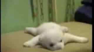 Knut - the polar bear