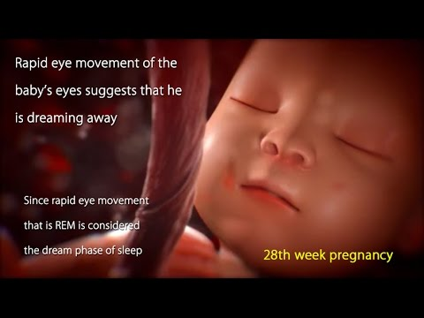 Thumbnail: 28 Weeks Pregnant: Watch Your Baby's Movement in 28 Week Pregnancy