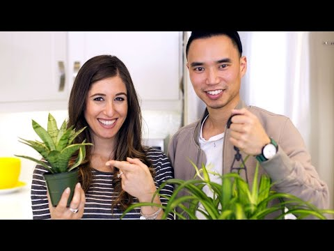 How To Care For Indoor HOUSEPLANTS! (feat. House Plant Journal)