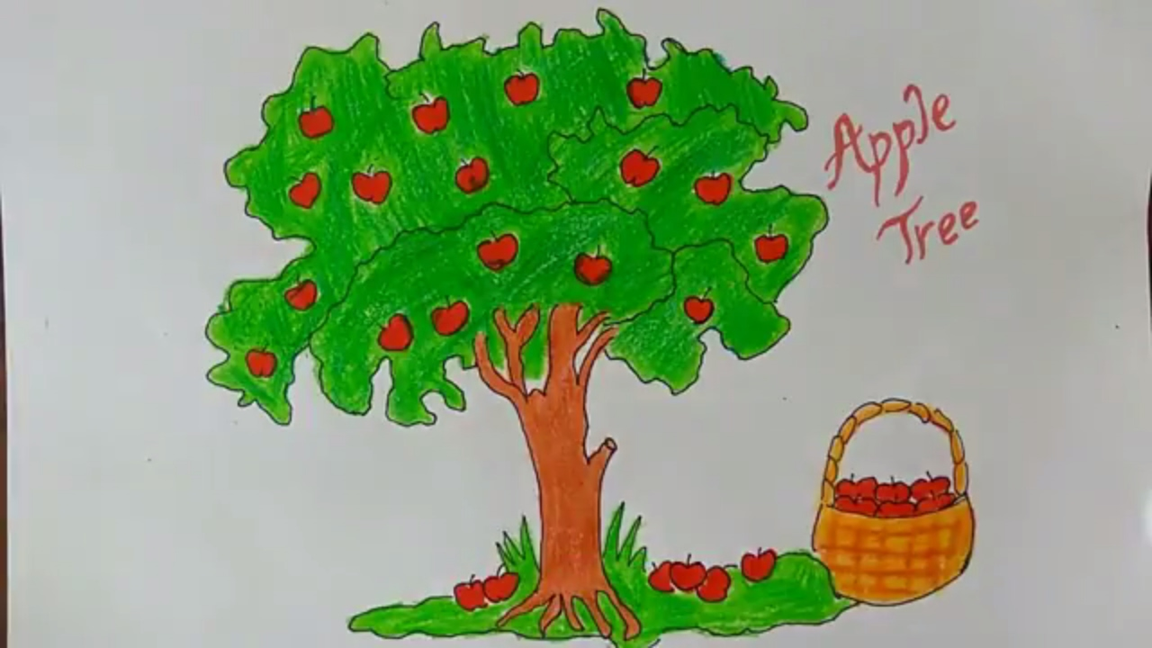 how to draw an apple tree how to draw a cartoon apple tree how