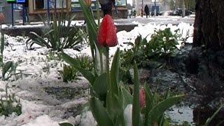 Останній раз павлоградці бачили сніг у квітні 20 років тому