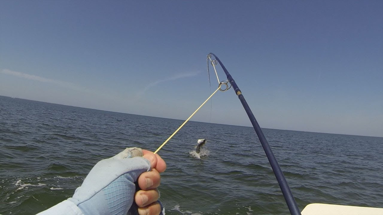 Saltwater fly fishing hd 720p doovi for Saltwater fly fishing