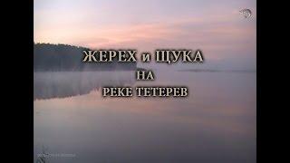 Жерех и щука на реке Тетерев